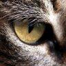 panels/user-accounts/data/faces/cat-eye.jpg