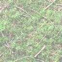 data/backgrounds/greenery.jpg