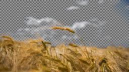 data/pixmaps/effects/frei0r-filter-bluescreen0r.png