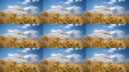 data/pixmaps/effects/frei0r-filter-cairoimagegrid.png