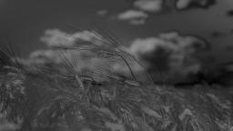 data/pixmaps/effects/frei0r-filter-color-distance.png