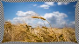 data/pixmaps/effects/frei0r-filter-lens-correction.png