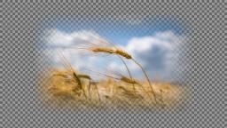 data/pixmaps/effects/frei0r-filter-mask0mate.png
